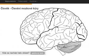slepá anatomie